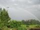 田んぼから立ちあがる虹