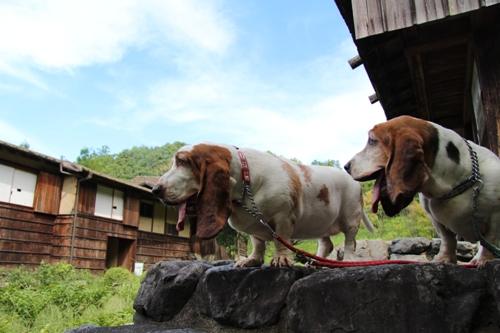 奈良民俗公園00013