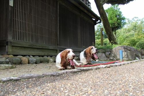 奈良民俗公園00009