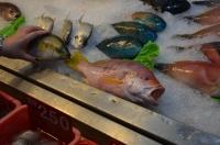魚選び150816
