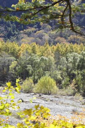 kamikouchi-nagano_15-10-14-0535.jpg