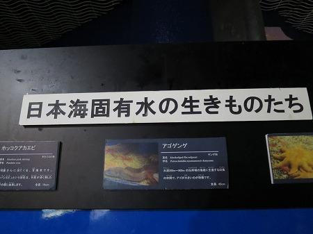 日本海固有の生き物