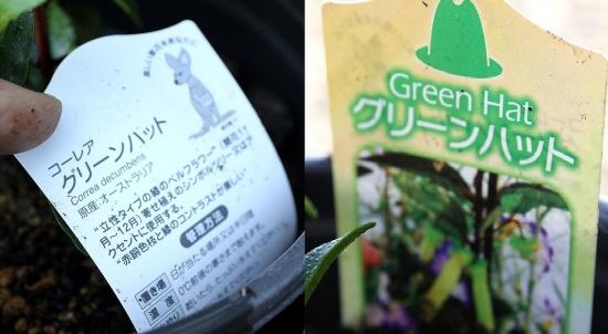 グリーンハット_9233 (1)