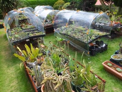 小型の簡易温室で強風に備える雨避け対策をしてみます♪2015.09.06