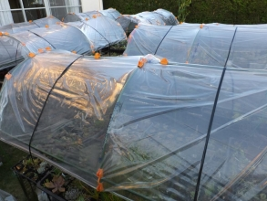 1階のミニ温室はハウスタイ(幅広い紐)を渡して暴風飛びを防ぎます2015.10.13