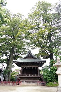 150827久伊豆神社の藤⑥