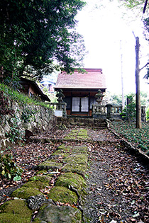 151005春日神社のクス⑤