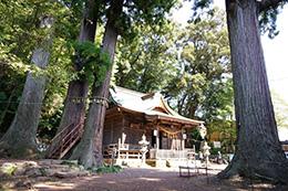 151006日枝神社の杉⑤