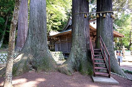 151006日枝神社の杉③