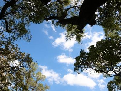 151014_08水天宮の木と空