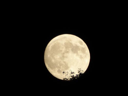 十五夜 お月様が出てきたところ
