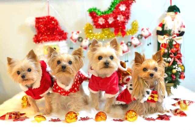 DSC_0055クリスマス