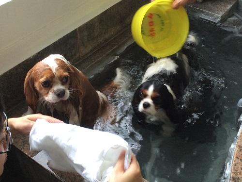 風呂じゃ2