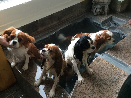 盛り風呂じゃ3