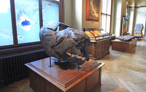 ウィーン自然史博物館見学紀(1)-15