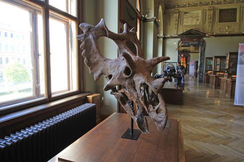 ウィーン自然史博物館見学紀(1)-18