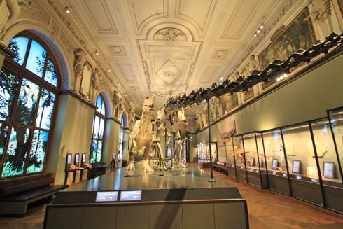 ウィーン自然史博物館見学紀(1)-23