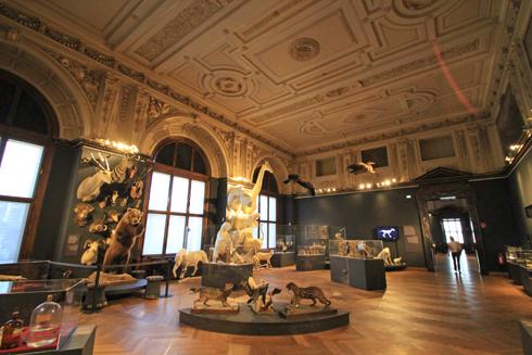 ウィーン自然史博物館見学紀(2)-1