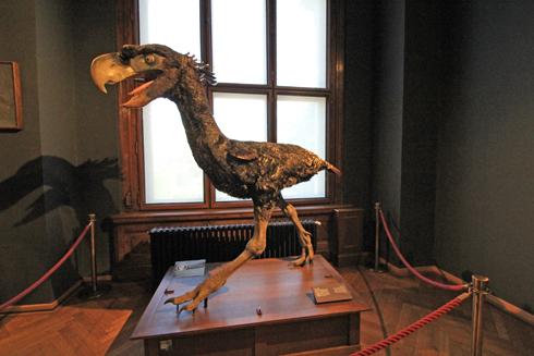 ウィーン自然史博物館見学紀(2)-4