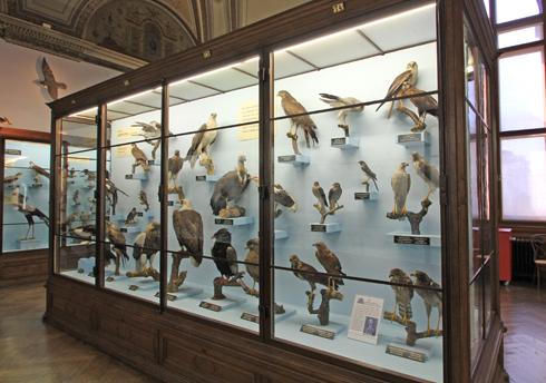 ウィーン自然史博物館見学紀(2)-7