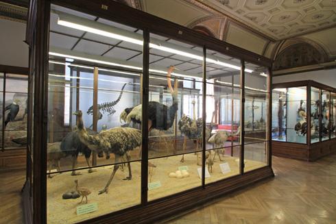 ウィーン自然史博物館見学紀(2)-8