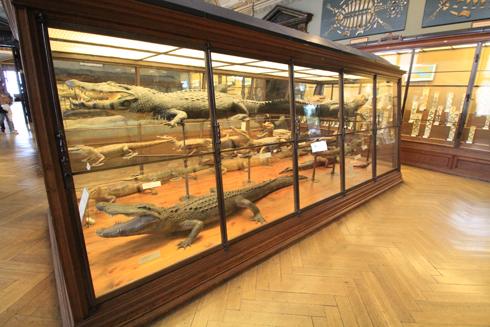 ウィーン自然史博物館見学紀(2)-10
