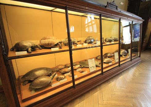 ウィーン自然史博物館見学紀(2)-11