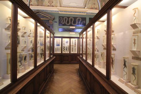 ウィーン自然史博物館見学紀(2)-15