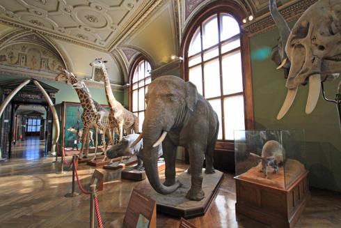 ウィーン自然史博物館見学紀(2)-18