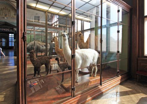 ウィーン自然史博物館見学紀(2)-19