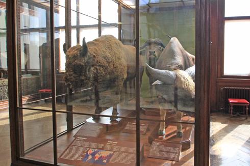 ウィーン自然史博物館見学紀(2)-20