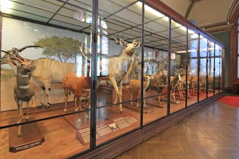 ウィーン自然史博物館見学紀(2)-21