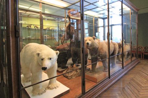 ウィーン自然史博物館見学紀(2)-22