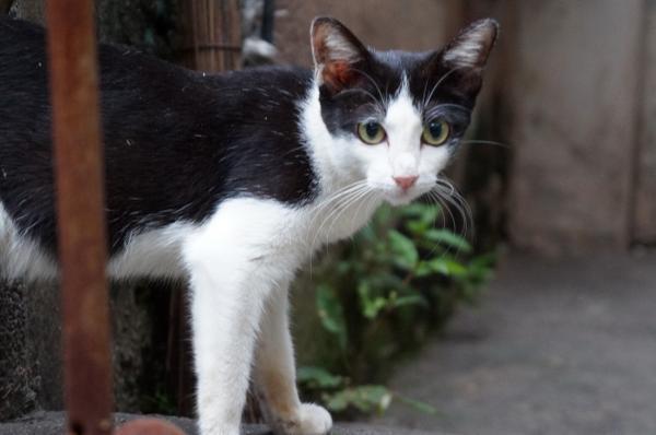 view siphraya&cat1
