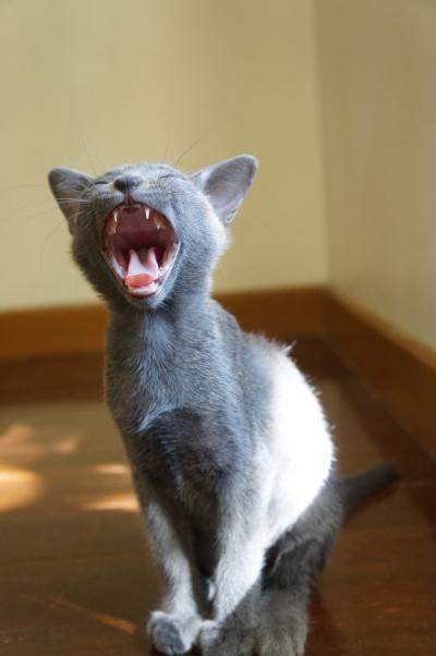 kittens koratcat4