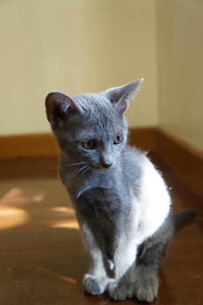 kittens koratcat5