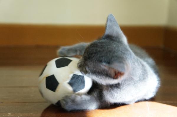 kittens koratcat9