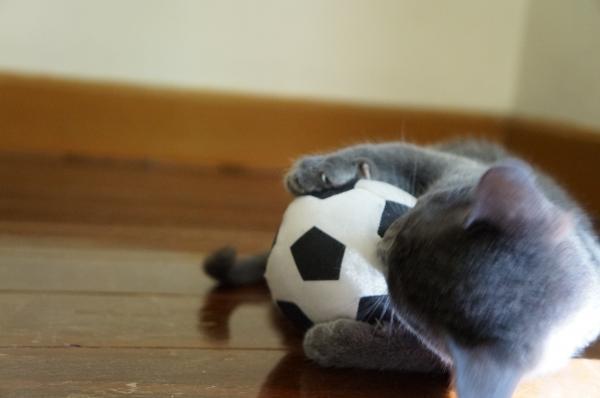 kittens koratcat10