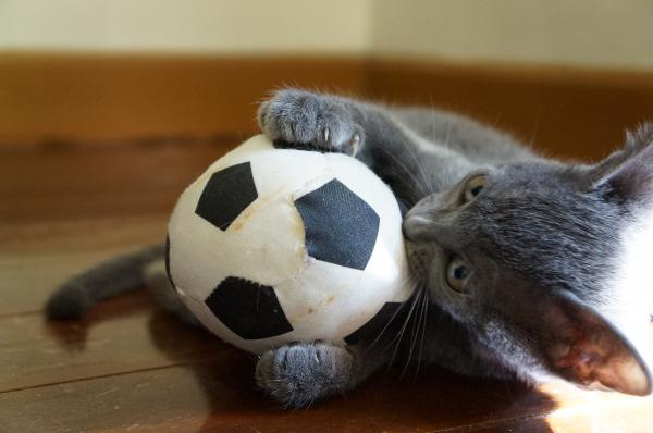kittens koratcat11