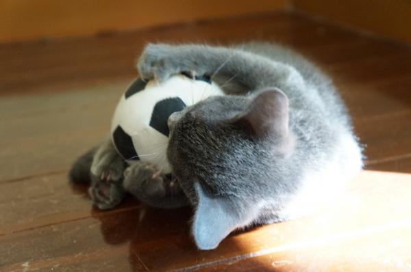 kittens koratcat12