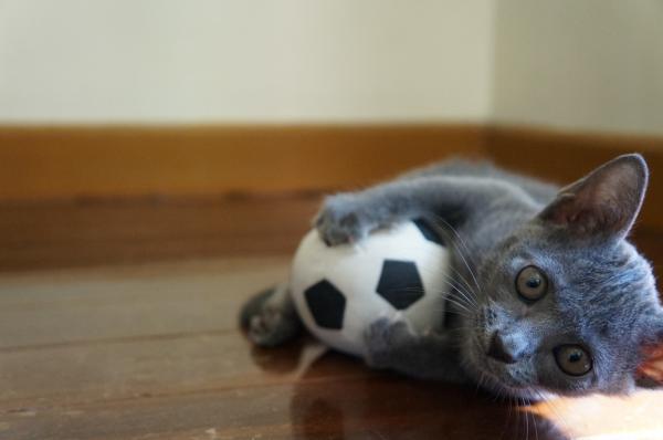 kittens koratcat13