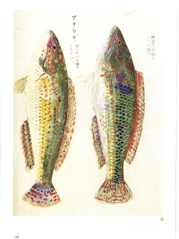matsumori-2.jpg