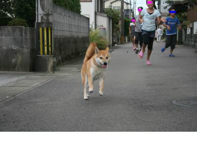 snap_tikagenoko414_20159120156.jpg