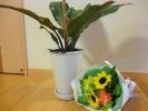 観葉植物とブーケ