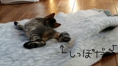 百花毛布7
