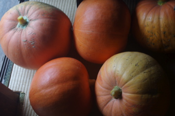 ゴロゴロかぼちゃ