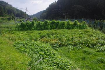 ジャングル畑