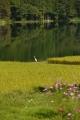 中綱湖のサギ