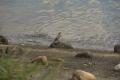 湖岸の小鳥