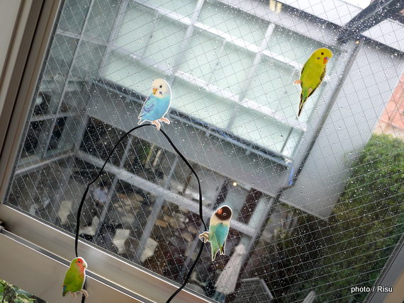 こんなところに鳥が!?インコがとまるコードキーパー-フェリシモ